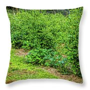 Tomatoes In Garden 2906t Throw Pillow
