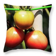 Tomatoes Ripening On The Vine Throw Pillow
