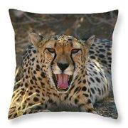 Tongue And Cheek Cheetah Throw Pillow