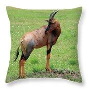 Topi Antelope - Masai Mara - Kenya Throw Pillow