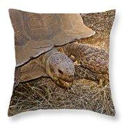 Tortoise Eating Lunch In Living Desert Zoo And Gardens In Palm Desert-california  Throw Pillow
