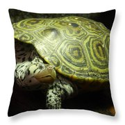 Turtle With A Tale To Tell Throw Pillow