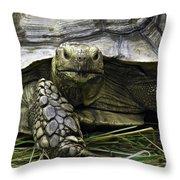 Tortoise's Stare Throw Pillow