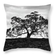 Tortue Oak Throw Pillow