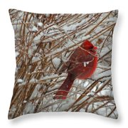 Touch Of Red For An Icy Morning Throw Pillow