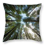 Towering Fir Trees In Oregon Forest State Park Throw Pillow