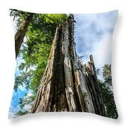 Towering Trees Throw Pillow