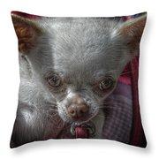 Toy Dog 1 Throw Pillow