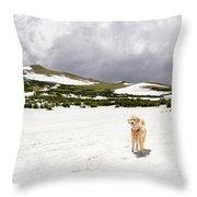 Traildog At Kingston Peak Snow Field Throw Pillow