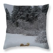Traildog Loving The Winter Scene In The Flatirons Throw Pillow