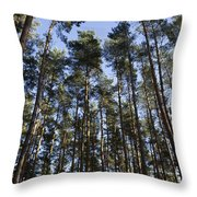 Tranquil Forest Throw Pillow