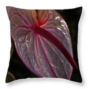 Translucent Beauty Throw Pillow