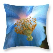 Translucent Blue Poppy Throw Pillow by Carol Groenen