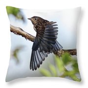Translucent Juvenile Bluebird Throw Pillow