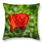 Translucent Poppy Throw Pillow