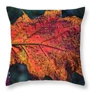 Translucent Red Oak Leaf Study Throw Pillow
