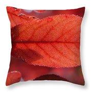 Transparence 23 Throw Pillow