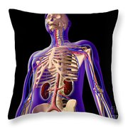 Transparent View Of Human Body Showing Throw Pillow