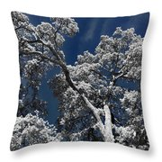 Trapped In Ice Throw Pillow
