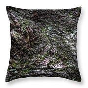 Treaty Oak 12 14 2015 038 Throw Pillow