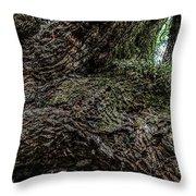 Treaty Oak 12 14 2015 042 Throw Pillow