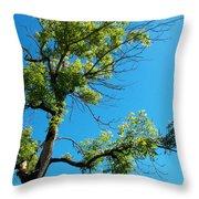 Tree Art 1 Throw Pillow
