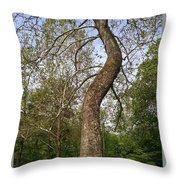 Tree At Botanical Gardens Throw Pillow