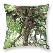 Tree At Ming Tombs Throw Pillow
