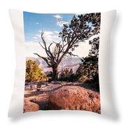 Tree At Moran Point Throw Pillow