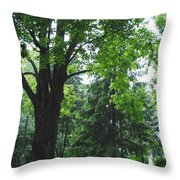 Tree Bench Throw Pillow
