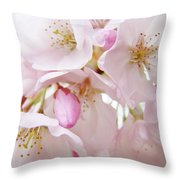 Tree Blossoms Art Prints Canvas Pink Spring Blossoms Baslee Troutman Throw Pillow