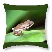 Tree Frog Close-up 01110 Throw Pillow