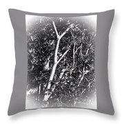 Tree In Summer In Black And White Throw Pillow