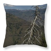 Tree Look Out Throw Pillow
