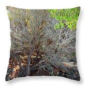 Tree Rock And Life Throw Pillow