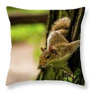 Tree Squirrel Throw Pillow