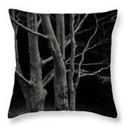 Beech Tree Throw Pillow