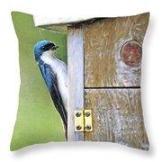 Tree Swallow At Nesting Box Throw Pillow