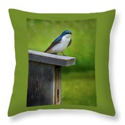 Tree Swallow Throw Pillow