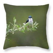 Tree Swallow Male Throw Pillow