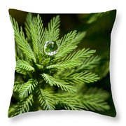 Tree Top Dew Drop Throw Pillow
