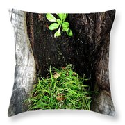 Tree Trunk Still Life Throw Pillow