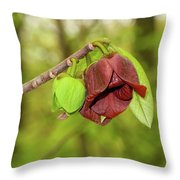 Tree Waking Up From Winter Throw Pillow