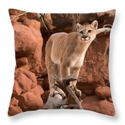Treed Mountain Lion Throw Pillow