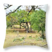 Trees 013 Throw Pillow