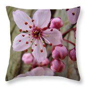 Trees Art Prints Canvas Pink Blossoms Spring Blue Sky Baslee Troutman Throw Pillow