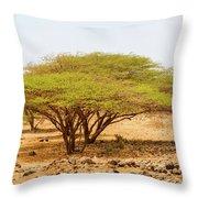 Trees In Kenya Throw Pillow