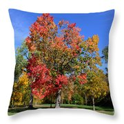 Tree's In The Forest 4 Throw Pillow