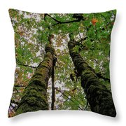 Trees Upward View Throw Pillow