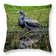 Tri-colored Heron 12 Throw Pillow